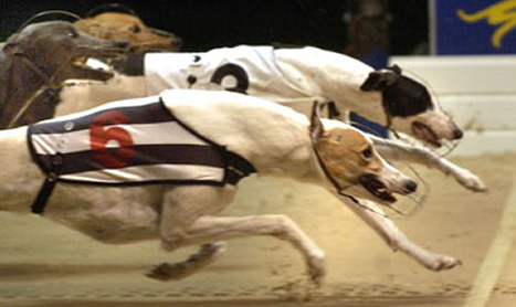 GREYHOUND RACING: The Duke reigns over Shelbourne