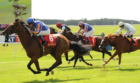 SHAMROCK Sun: Curragh Group action