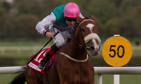SHAMROCK Tues: Non Runners grow ahead of Champions Day