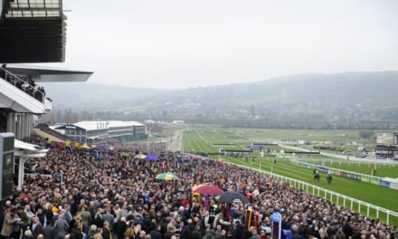 BETDAQ XSP: Winning at the Cheltenham Festival