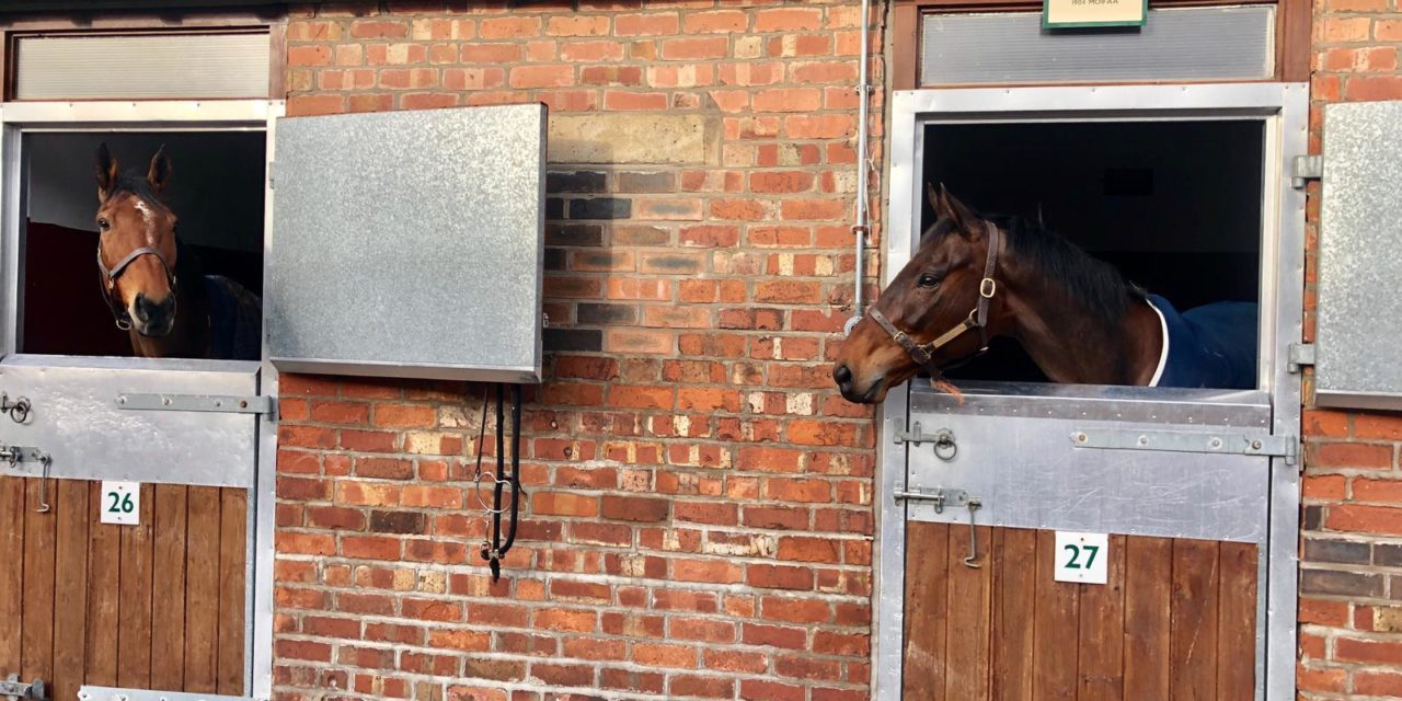 HARRY WHITTINGTON: Thrilled to have four winners this week