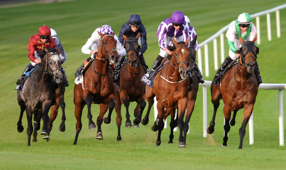 SHAMROCK Fri: Leopardstown NAP