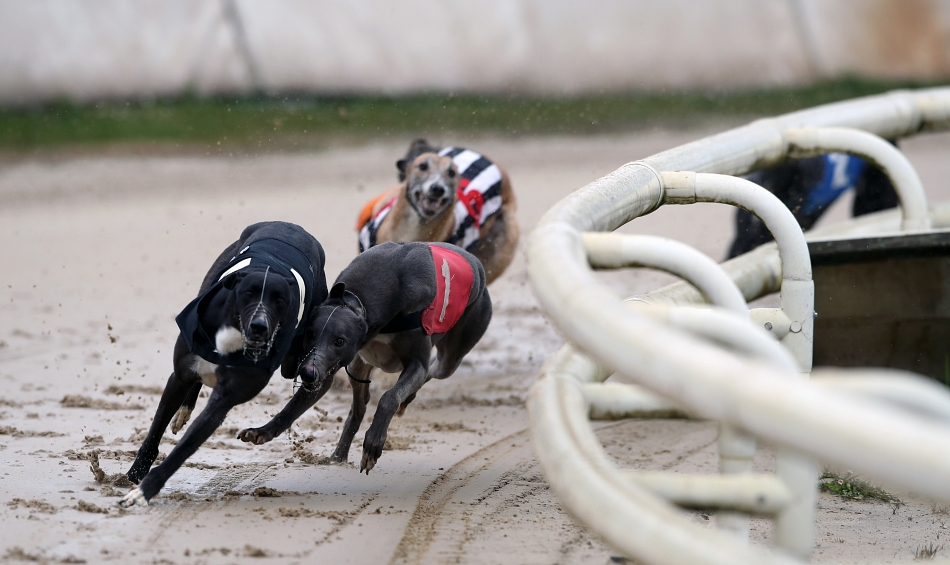 Three Tips For Trading Greyhounds on BETDAQ